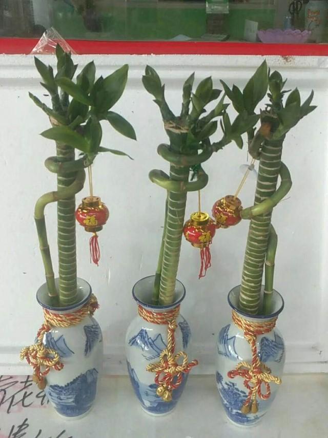 青花瓶富贵竹45cm 20个/件 大卫