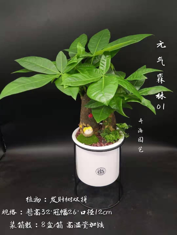元气森林  8盆/件  卉海