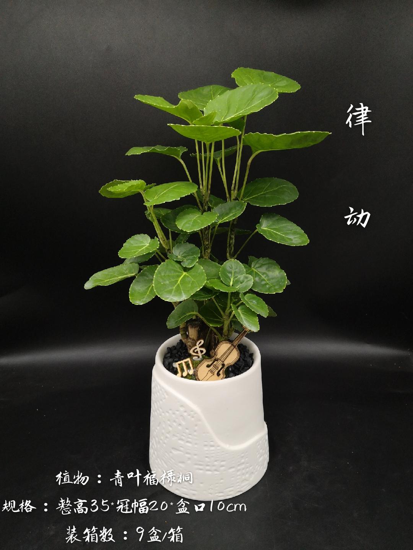 律动 9盆/件 卉海