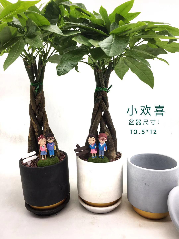 小欢喜 15盆/件 森境