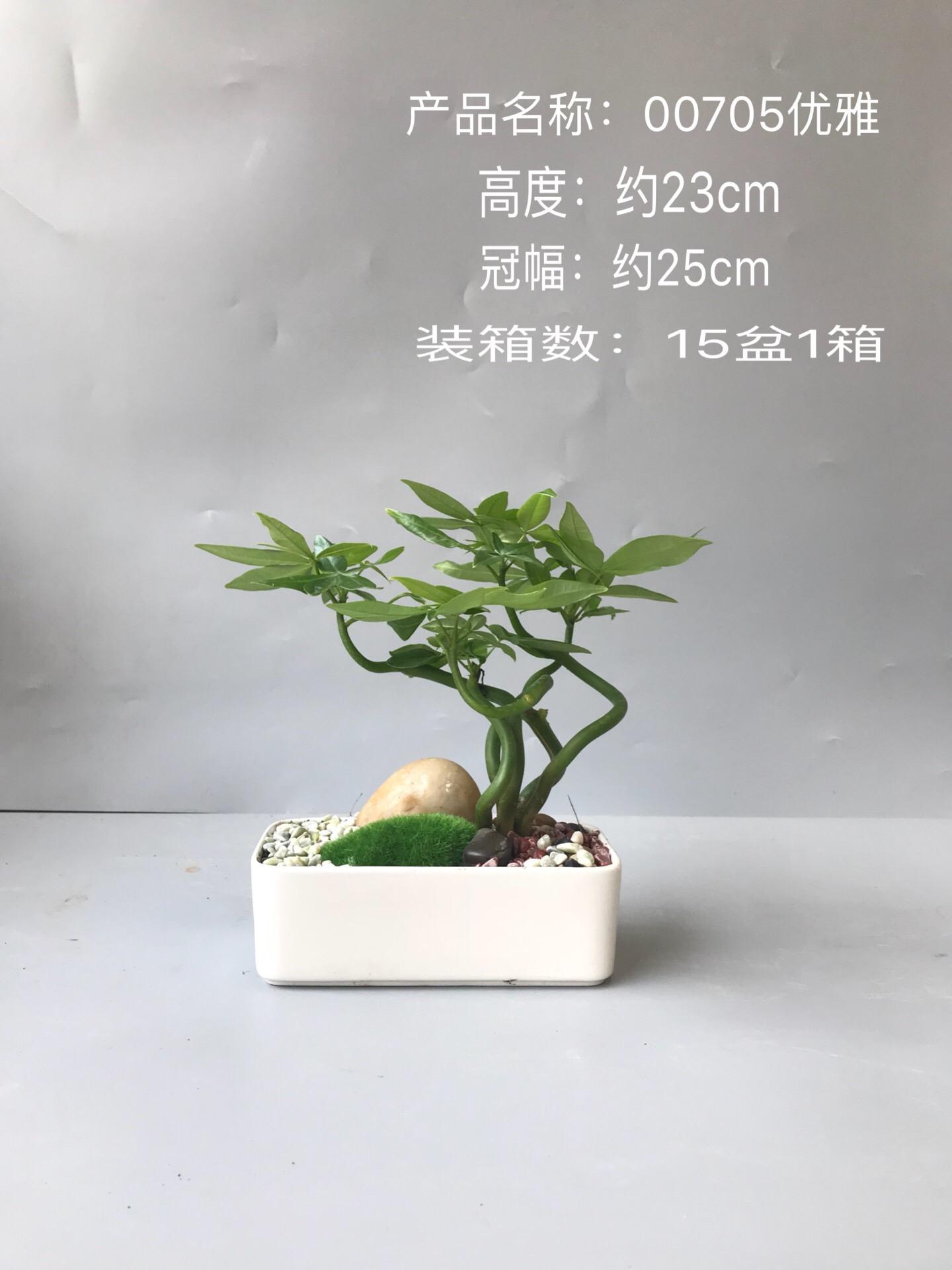 优雅 15盆/件 芸采